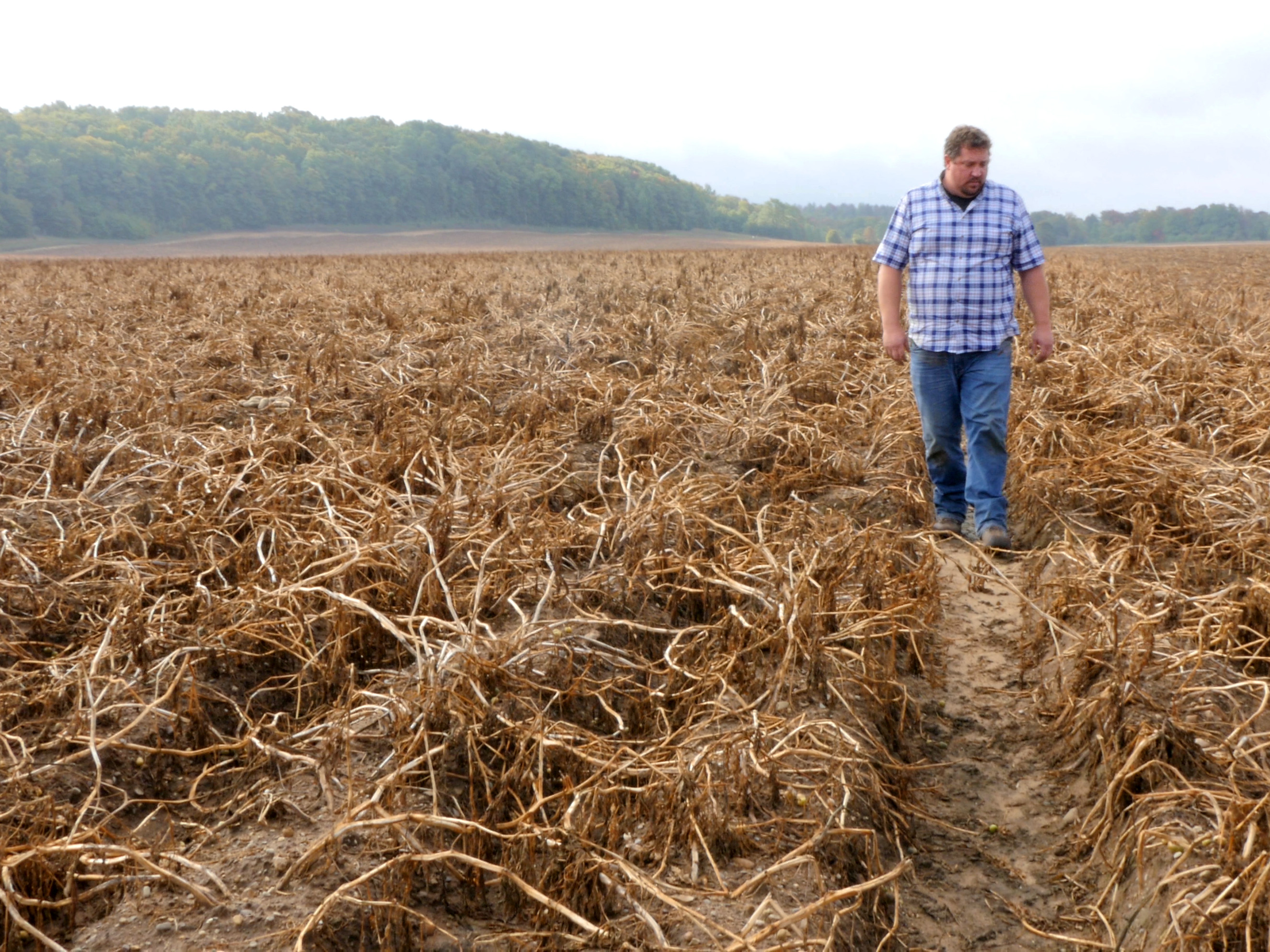 Don Kitchen inspecting his fields