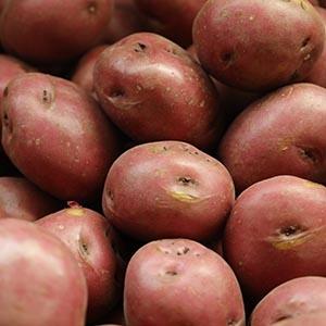 Potatoes 101 | Michigan Potatoes